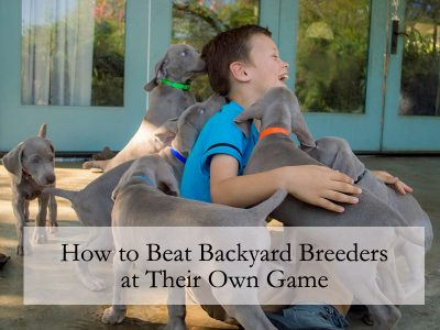 How to Beat Backyard Breeders at Their Own Game